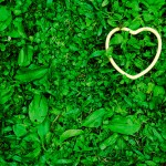 heart-in-grass